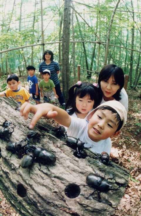 Beetle Natural Kingdom Mushimushi Land