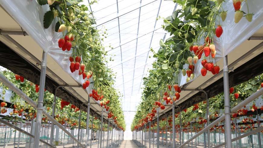Berrys Farm FUSHIMI