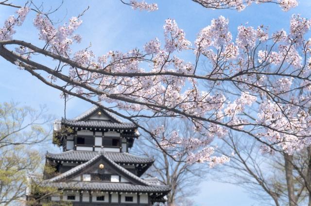 春、城を背景に咲き誇る桜