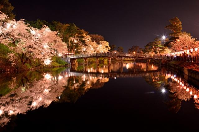 桜がぼんぼりの明かりに映える