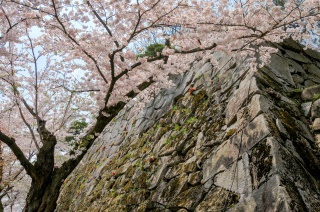 Morioka Castle Ruins Park (Iwate Park)