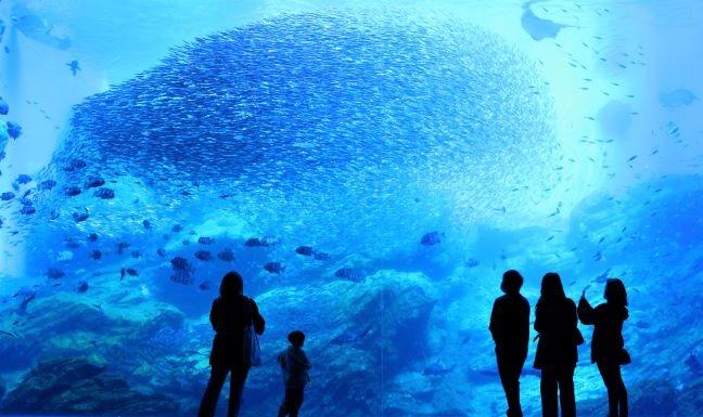 仙台海之森林水族馆