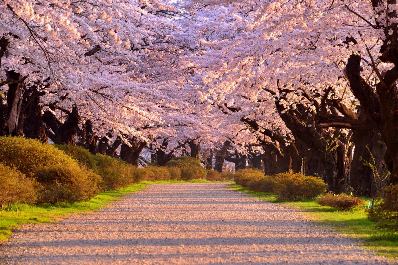 Kitakami City Tenshochi Municipal Park (Kitakami Tenshochi Park)