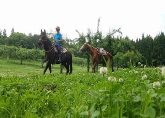 9/20~11/10从青森市出发最后返回青森市的出租车行程:骑马与苹果采摘行程