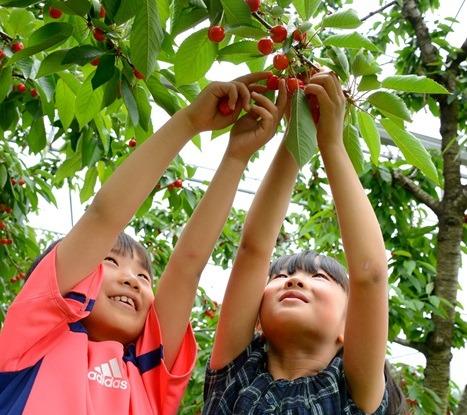 ◆ฤดูร้อน◆ ทัวร์ไปเรียนรู้เกี่ยวกับการใช้ประโยชน์จากวัตถุดิบตามฤดูกาลหรือช่วงต้นฤดูร้อน