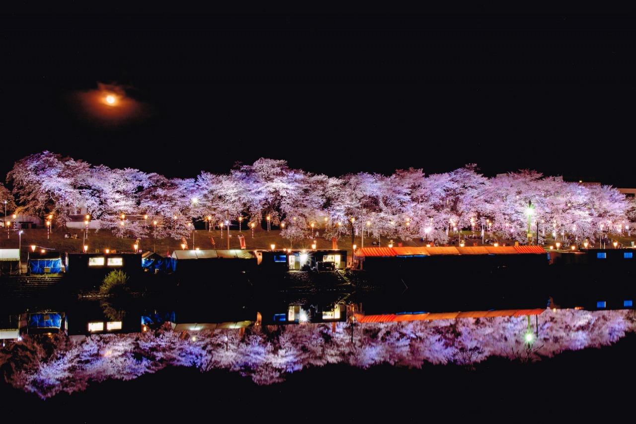 おおがわら桜まつり|東北DC観光素材集 | 旅東北 - 東北の観光・旅行情報サイト