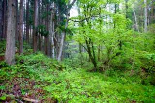 森林セラピー体験